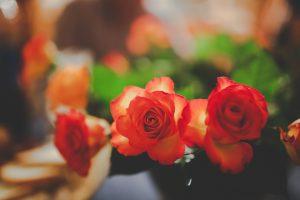 2015_Rose_List
