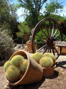garden-374959_640
