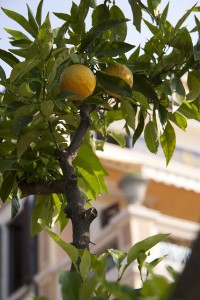 lemon-70586_640