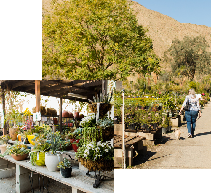 Residential Nursery Moller's Garden Center Palm Desert