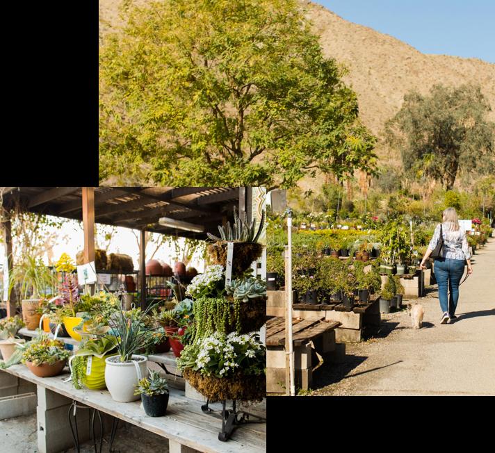 Mollers Garden Center Palm Desert
