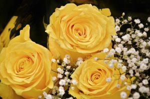 roses-366172_640
