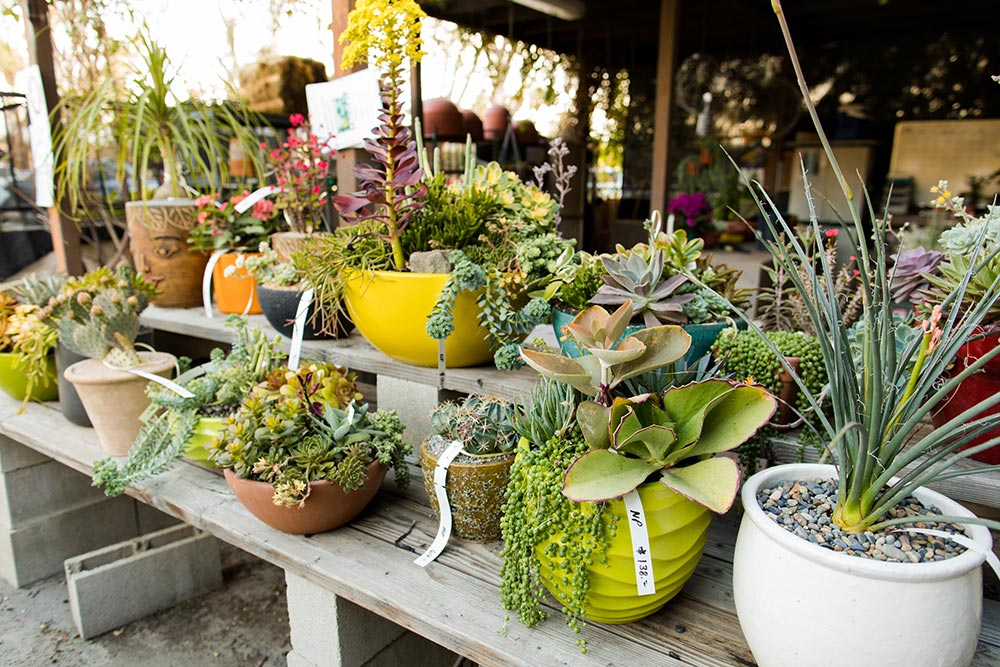 Garden Nursery in Palm Springs Area