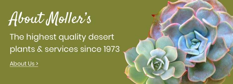 About Moller's Garden Center